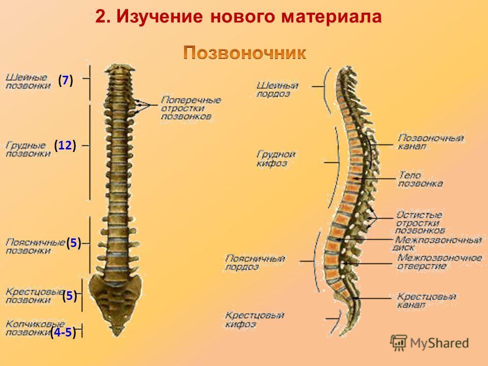 (7)(7) (12) (5)(5) (5)(5) (4-5) 2. Изучение нового материала