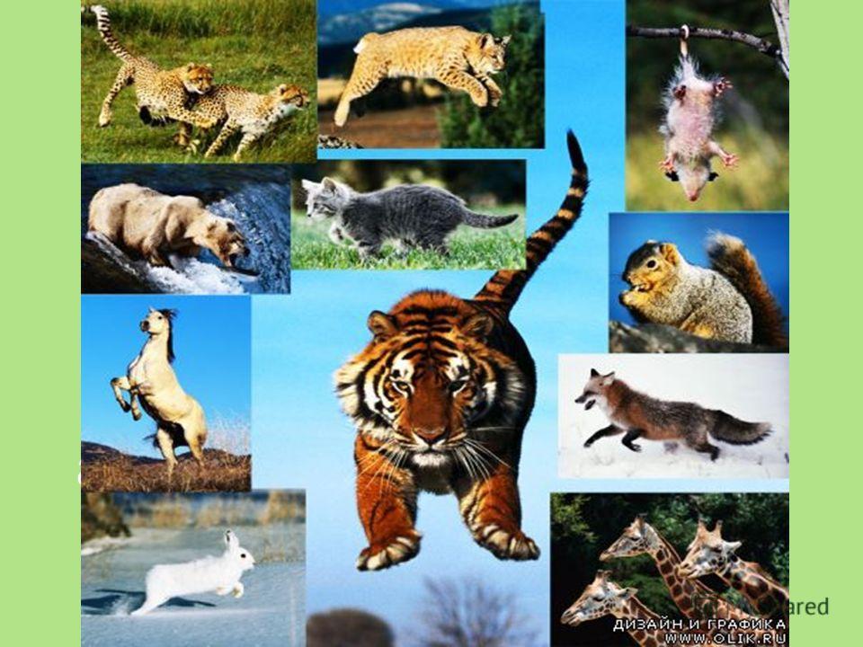 Движение. Движение простейших и беспозвоночных Движение – одно из главных свойств живого организма, обеспечивающее организму возможность активного взаимодействия с окружающей средой.