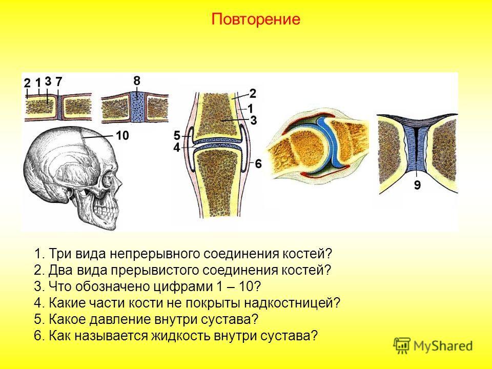 1. Что обозначено на рисунке цифрами 1 – 10? 2. Что собой представляет диафиз? Эпифиз? Метафиз? Апофиз? 3. Какие свойства костной ткани придают органические и неорганические вещества? 4. Где находятся клетки, за счет которых кость растет в длину и в