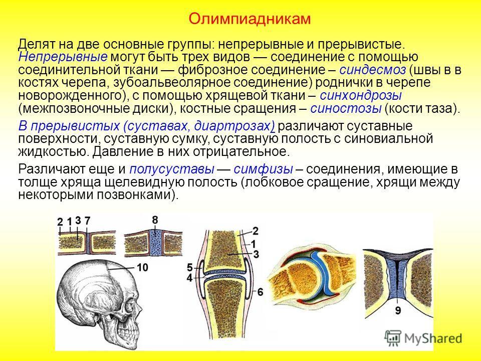 Делят на две основные группы: непрерывные и прерывистые. Непрерывные могут быть трех видов соединение с помощью соединительной ткани фиброзное соединение (роднички в черепе новорожденного), с помощью хрящевой ткани (межпозвоночные диски), костные сра