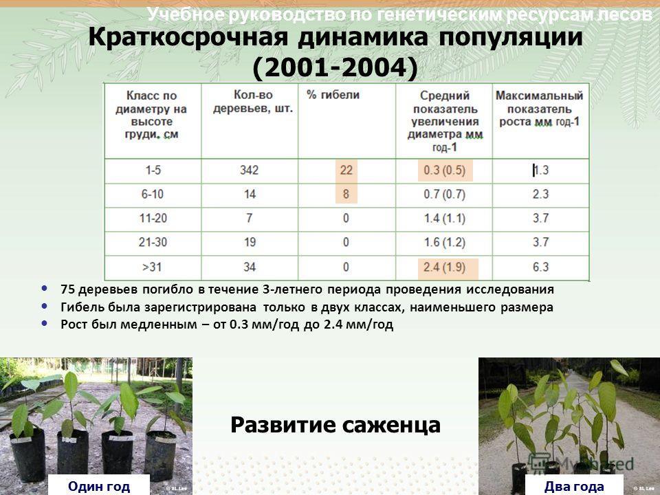 Учебное руководство по генетическим ресурсам лесов Краткосрочная динамика популяции (2001-2004) 75 деревьев погибло в течение 3-летнего периода проведения исследования Гибель была зарегистрирована только в двух классах, наименьшего размера Рост был м