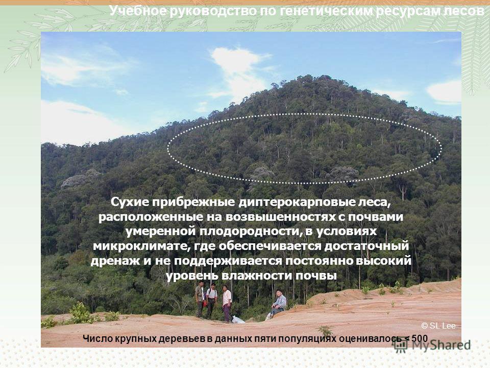 Учебное руководство по генетическим ресурсам лесов © SL Lee Сухие прибрежные диптерокарповые леса, расположенные на возвышенностях с почвами умеренной плодородности, в условиях микроклимате, где обеспечивается достаточный дренаж и не поддерживается п