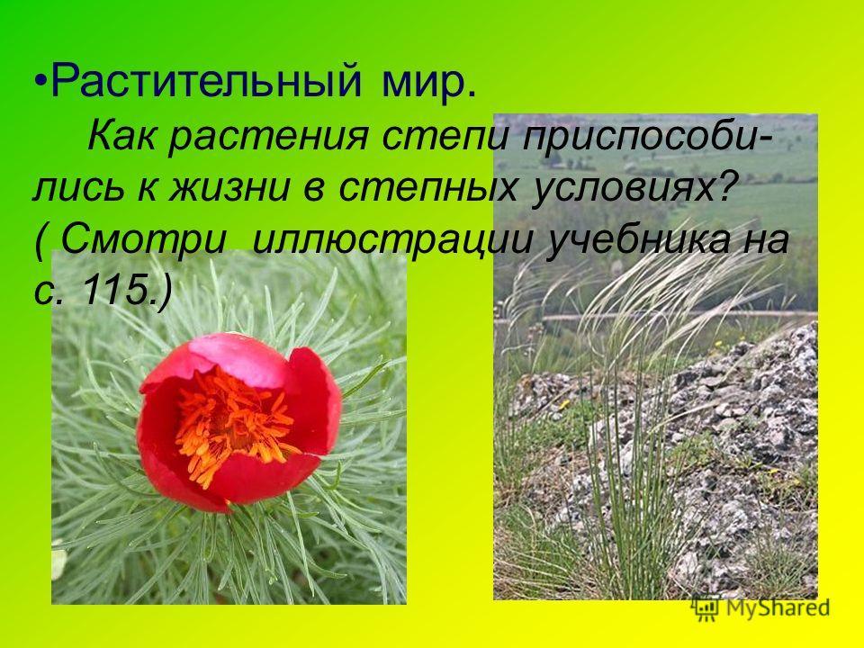 Растительный мир. Как растения степи приспособи- лись к жизни в степных условиях? ( Смотри иллюстрации учебника на с. 115.)