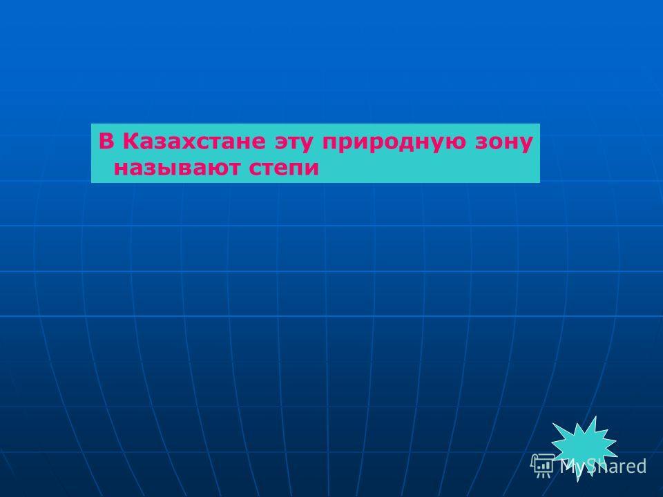 В Казахстане эту природную зону называют степи