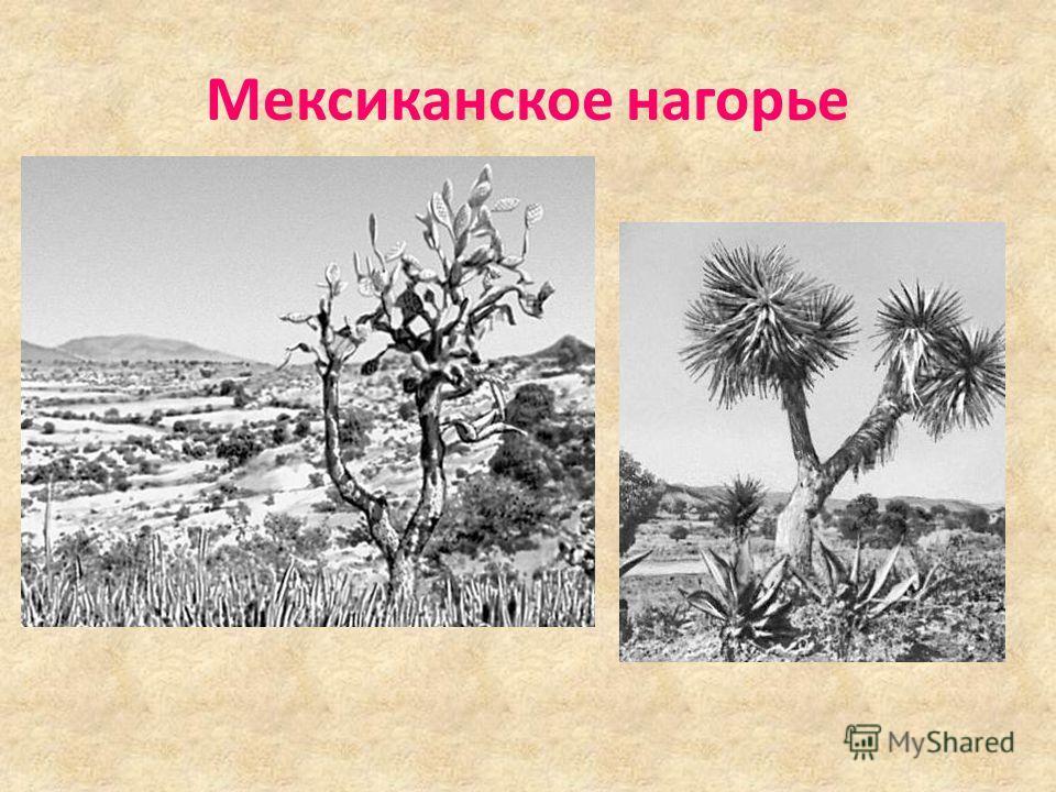 ДОЛИНА СМЕРТИ межгорная впадина в пустыне штата Калифорния. Национальный парк с 1933. Длина около 250 км. Одна из наиболее глубоких (85 м ниже уровня моря) и безводных впадин на Земле. Максимальная температура воздуха 56,7 о С. Исключительная засушли