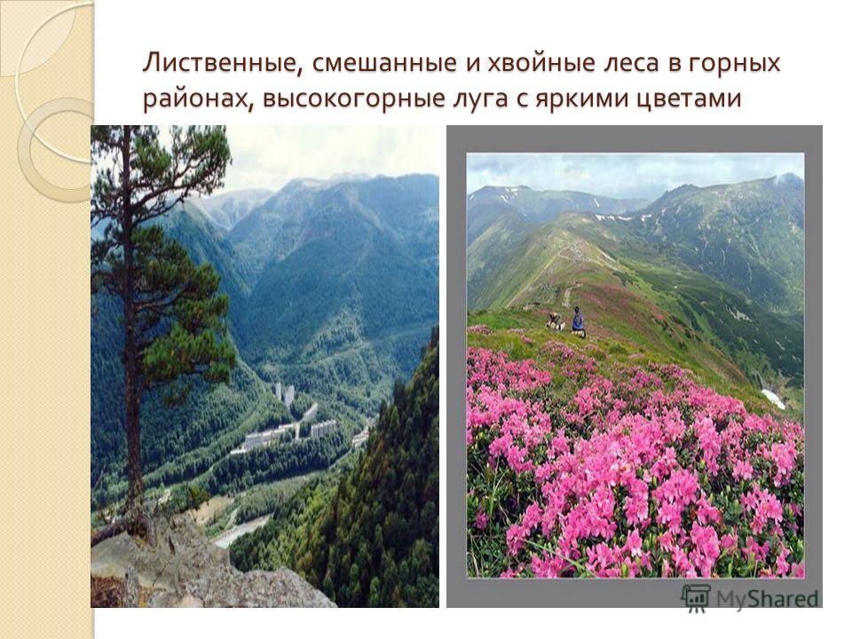 Лиственные, смешанные и хвойные леса в горных районах, высокогорные луга с яркими цветами