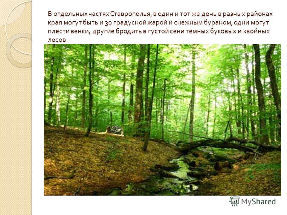 В отдельных частях Ставрополья, в один и тот же день в разных районах края могут быть и 30 градусной жарой и снежным бураном, одни могут плести венки, другие бродить в густой сени тёмных буковых и хвойных лесов.