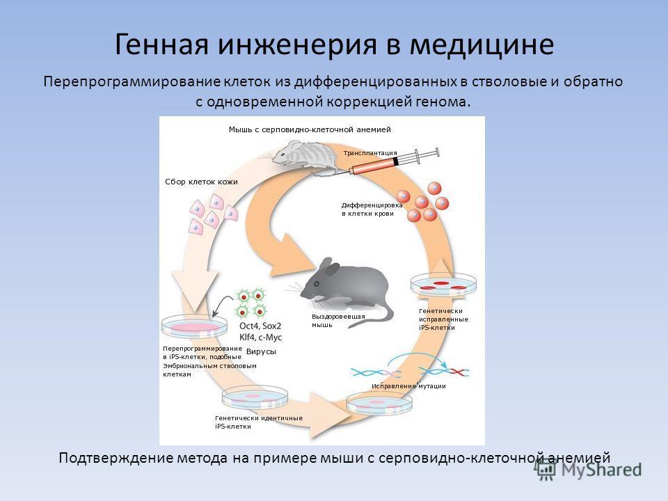 Генная инженерия в медицине Перепрограммирование клеток из дифференцированных в стволовые и обратно с одновременной коррекцией генома. Подтверждение метода на примере мыши с серповидно-клеточной анемией