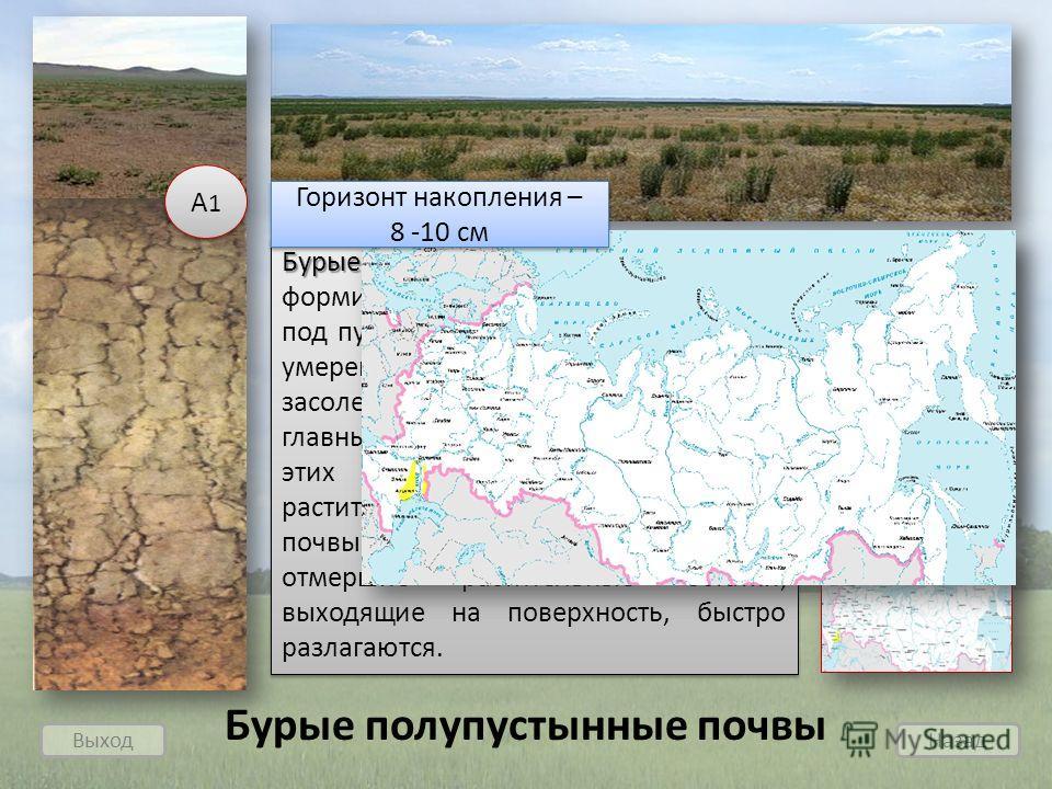 Выход Назад Бурые полупустынные Бурые полупустынные почвы - формируются в условиях сухого климата под пустынно-степной растительностью умеренного пояса. Повышенная засоленность является одной из главных причин низкого плодородия этих почв. Малое коли