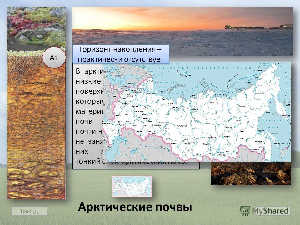 Выход Назад Арктические почвы В арктической пустыне весь год низкие температуры, на поверхности лежит снег или лед, которые не могут быть материнской породой. Поэтому почв в арктической пустыне почти нет. В Арктике есть участки, не занятые снегом и л