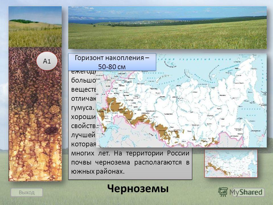Выход Назад Черноземы Богатая степная растительность ежегодно поставляет в почву большое количество органического вещества, поэтому черноземы отличаются высоким содержанием гумуса. Чернозем отличается хорошими водно-воздушными свойствами. Чернозем яв