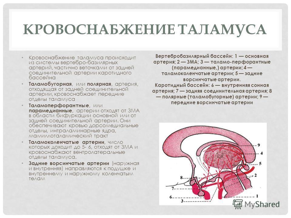 КРОВОСНАБЖЕНИЕ ТАЛАМУСА Кровоснабжение таламуса происходит из системы вертебро-базилярных артерий, частично веточками от задней соединительной артерии каротидного бассейна Таламобугорная, или полярная, артерия, отходящая от задней соединительной ар