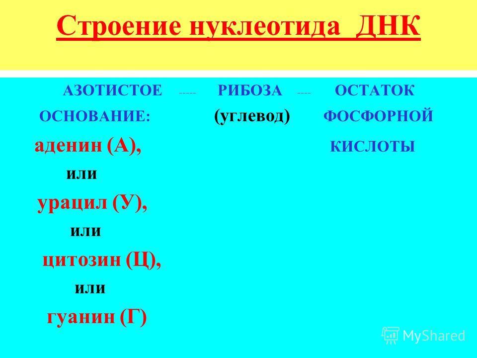 Строение нуклеотида ДНК АЗОТИСТОЕ ----- РИБОЗА ---- ОСТАТОК ОСНОВАНИЕ: (углевод) ФОСФОРНОЙ аденин (А), КИСЛОТЫ или урацил (У), или цитозин (Ц), или гуанин (Г)