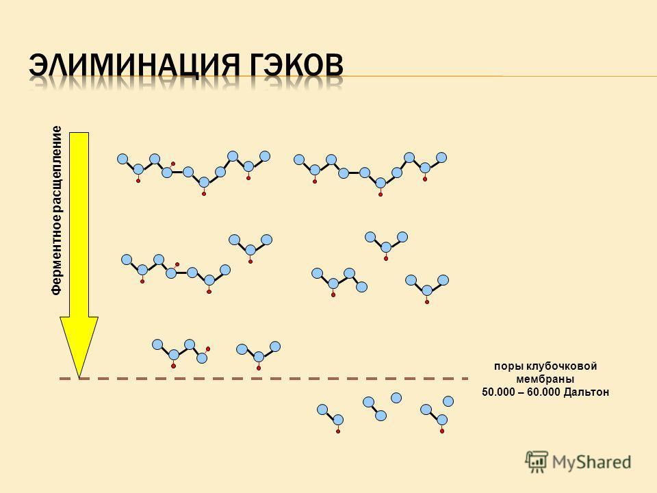 поры клубочковой мембраны 50.000 – 60.000 Дальтон Ферментное расщепление