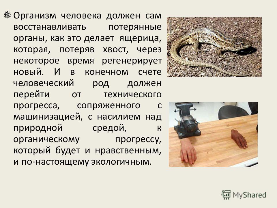 Организм человека должен сам восстанавливать потерянные органы, как это делает ящерица, которая, потеряв хвост, через некоторое время регенерирует новый. И в конечном счете человеческий род должен перейти от технического прогресса, сопряженного с маш