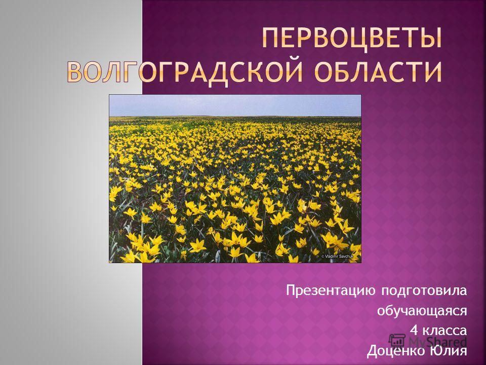 Презентацию подготовила обучающаяся 4 класса Доценко Юлия