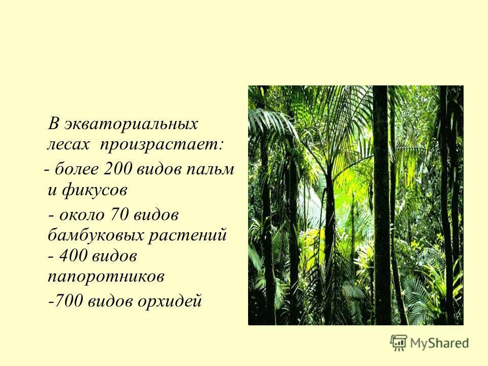 В экваториальных лесах произрастает: - более 200 видов пальм и фикусов - около 70 видов бамбуковых растений - 400 видов папоротников -700 видов орхидей