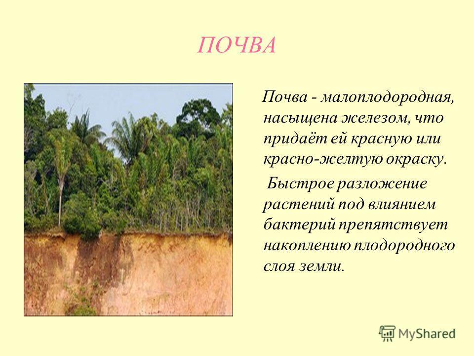 ПОЧВА Почва - малоплодородная, насыщена железом, что придаёт ей красную или красно-желтую окраску. Быстрое разложение растений под влиянием бактерий препятствует накоплению плодородного слоя земли.