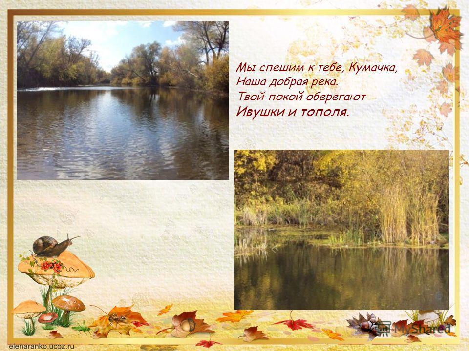 Мы спешим к тебе, Кумачка, Наша добрая река. Твой покой оберегают Ивушки и тополя.