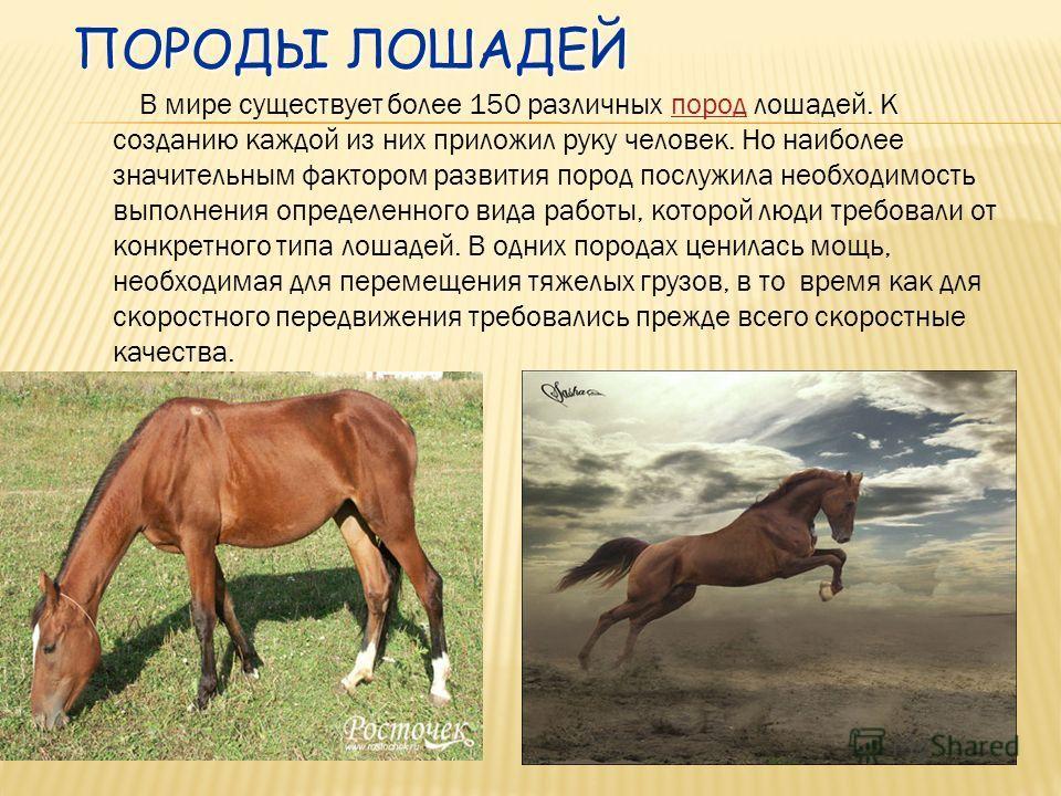 Эогиппус, или «лошадь зари», была маленьким травоядным животным ростом не выше кролика. У него было по 4 пальца на передних ногах и 3 - на задних, каждый заканчивался толстым широки ногтем. Мезогиппус, потомок эогиппуса, имел рост 50 см и по 3 пальца