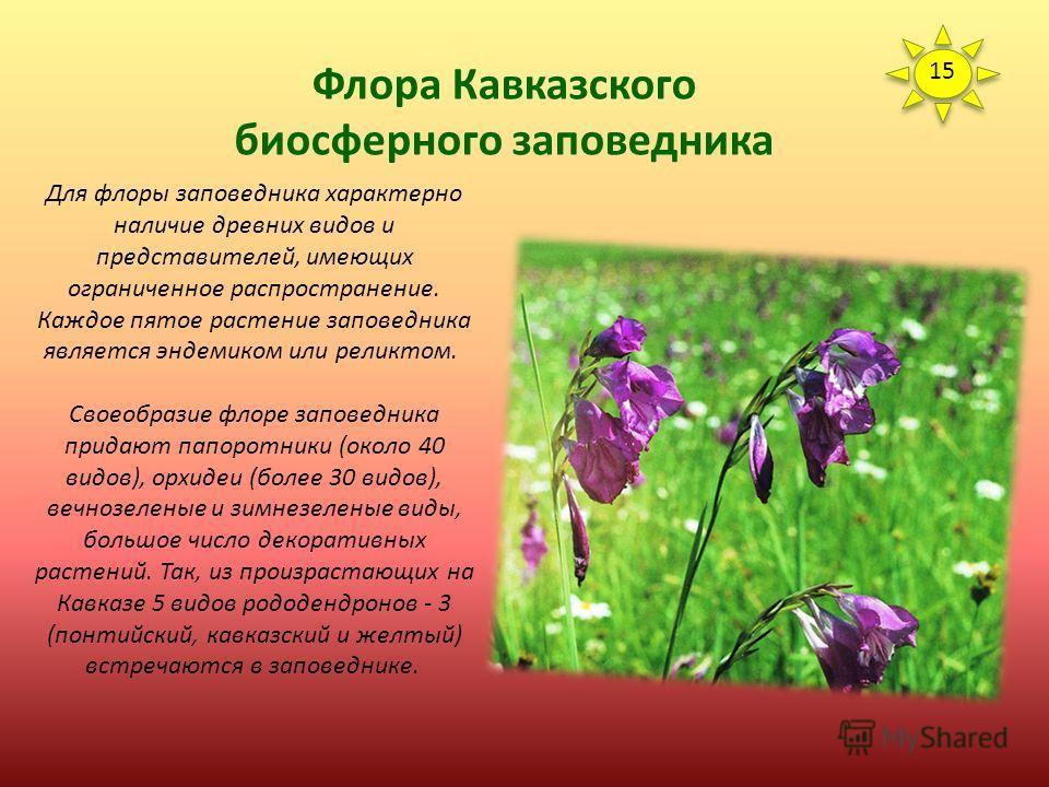 Флора Кавказского биосферного заповедника Флора Кавказского заповедника насчитывает 3000 видов, из которых более половины - сосудистые растения. Преобладающими семействами являются астровые (223 вида), мятликовые (114), резанные (108), бобовые (82) и