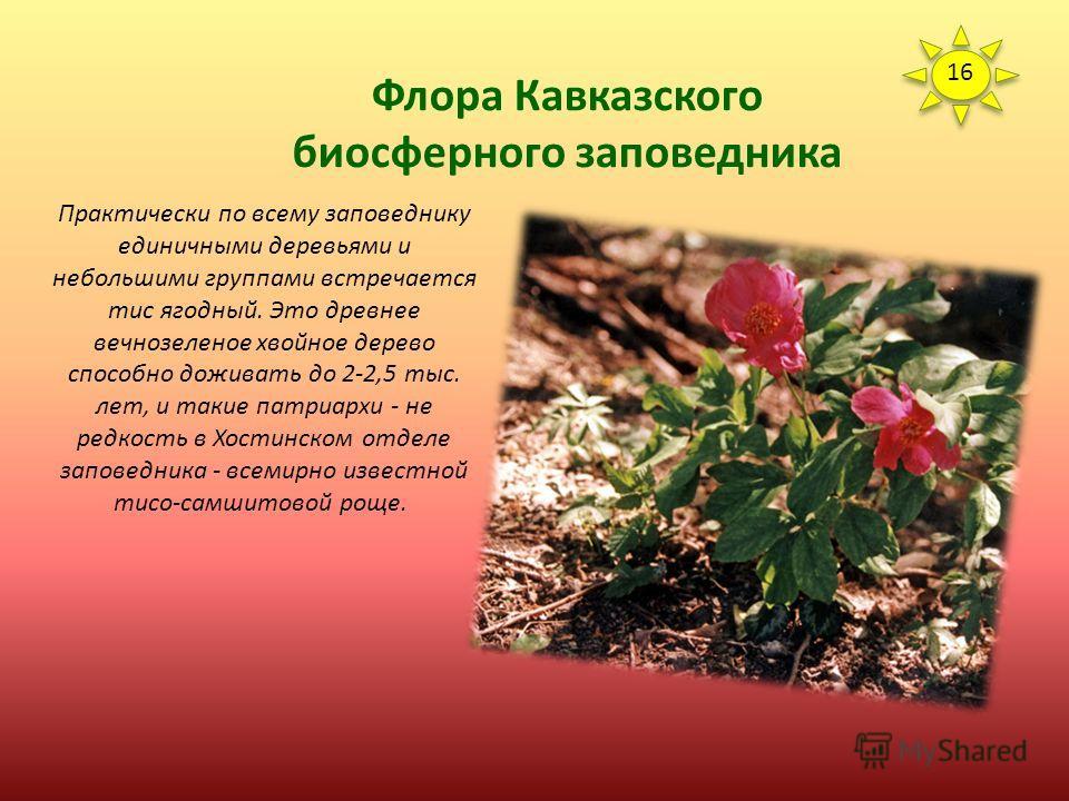 Флора Кавказского биосферного заповедника Для флоры заповедника характерно наличие древних видов и представителей, имеющих ограниченное распространение. Каждое пятое растение заповедника является эндемиком или реликтом. Своеобразие флоре заповедника