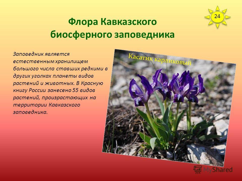 Флора Кавказского биосферного заповедника Между лесным и горно-луговым поясами переходную полосу составляют парковые кленовники, криволесья, мелколесья, кустарниковые формации и родореты с участками субальпийского высокотравья. Более 15 видов образую