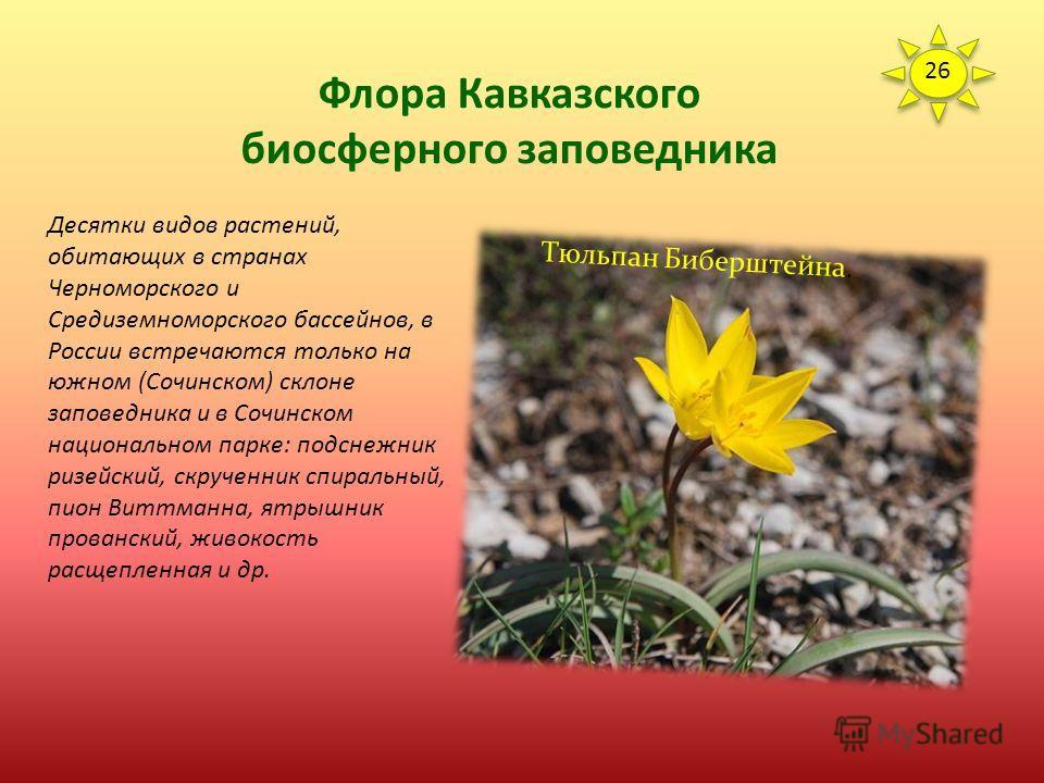 Флора Кавказского биосферного заповедника Кроме видов, занесенных в Красные книги разного уровня, в заповеднике встречаются редчайшие растения, по разным причинам не попавшие в официальные списки угрожаемых видов. Особо следует выделить узколокальных