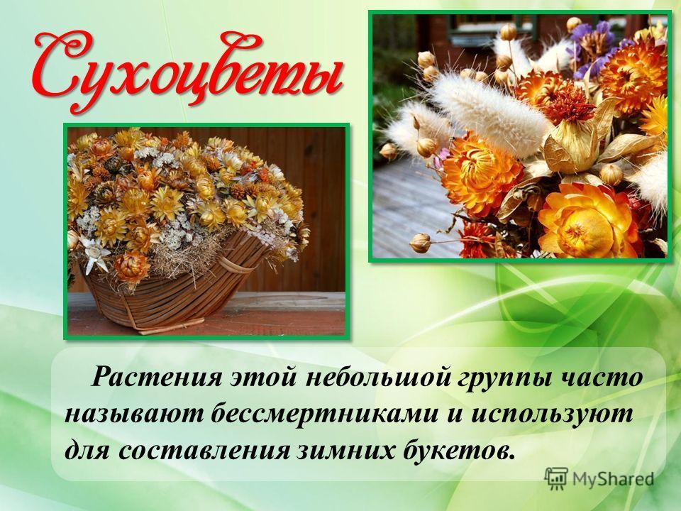 Сухоцветы Растения этой небольшой группы часто называют бессмертниками и используют для составления зимних букетов.