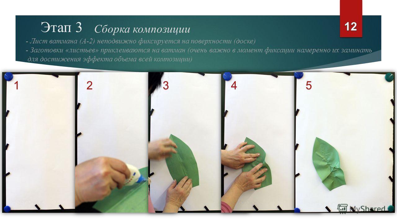 Этап 3 Сборка композиции - Лист ватмана (А-2) неподвижно фиксируется на поверхности (доске) - Заготовки «листьев» приклеиваются на ватман (очень важно в момент фиксации намеренно их заминать для достижения эффекта объема всей композиции) 12345