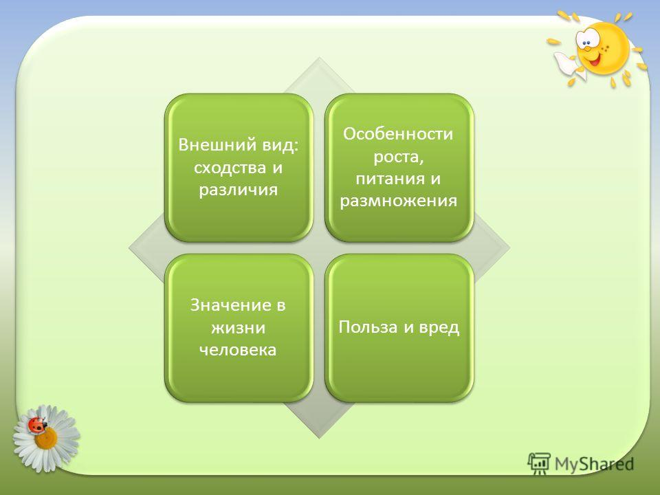 Внешний вид: сходства и различия Особенности роста, питания и размножения Значение в жизни человека Польза и вред