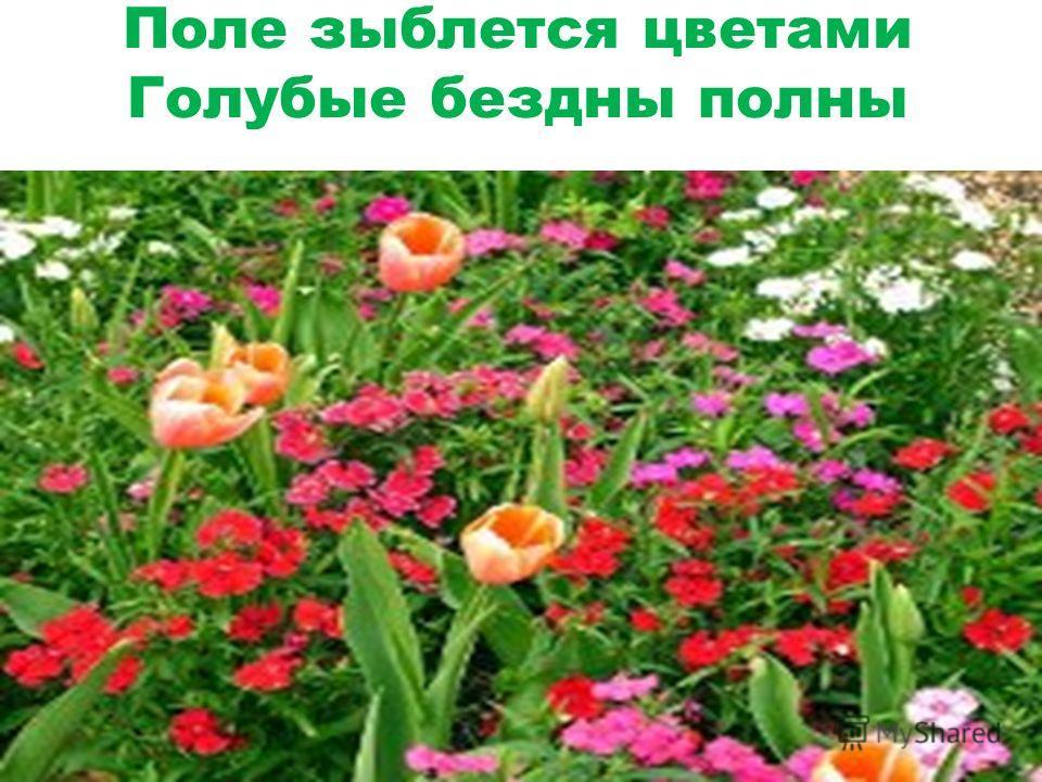 Поле зыблется цветами Голубые бездны полны