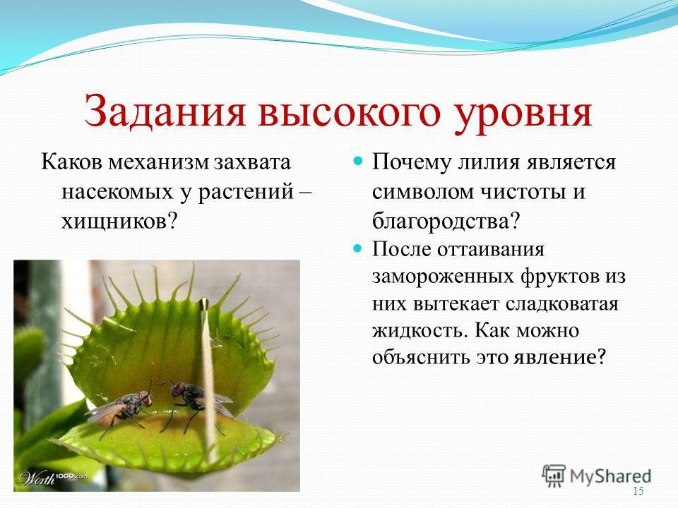 Задания высокого уровня Каков механизм захвата насекомых у растений – хищников? Почему лилия является символом чистоты и благородства? После оттаивания замороженных фруктов из них вытекает сладковатая жидкость. Как можно объяснить э то явление? 15