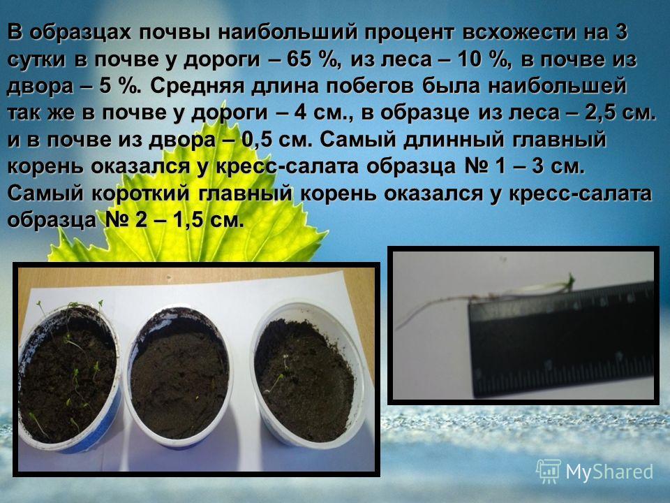 В образцах почвы наибольший процент всхожести на 3 сутки в почве у дороги – 65 %, из леса – 10 %, в почве из двора – 5 %. Средняя длина побегов была наибольшей так же в почве у дороги – 4 см., в образце из леса – 2,5 см. и в почве из двора – 0,5 см.