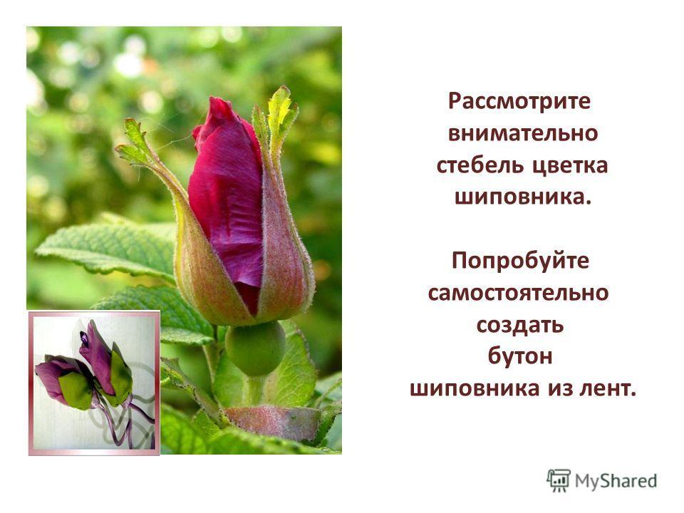 Рассмотрите внимательно стебель цветка шиповника. Попробуйте самостоятельно создать бутон шиповника из лент.
