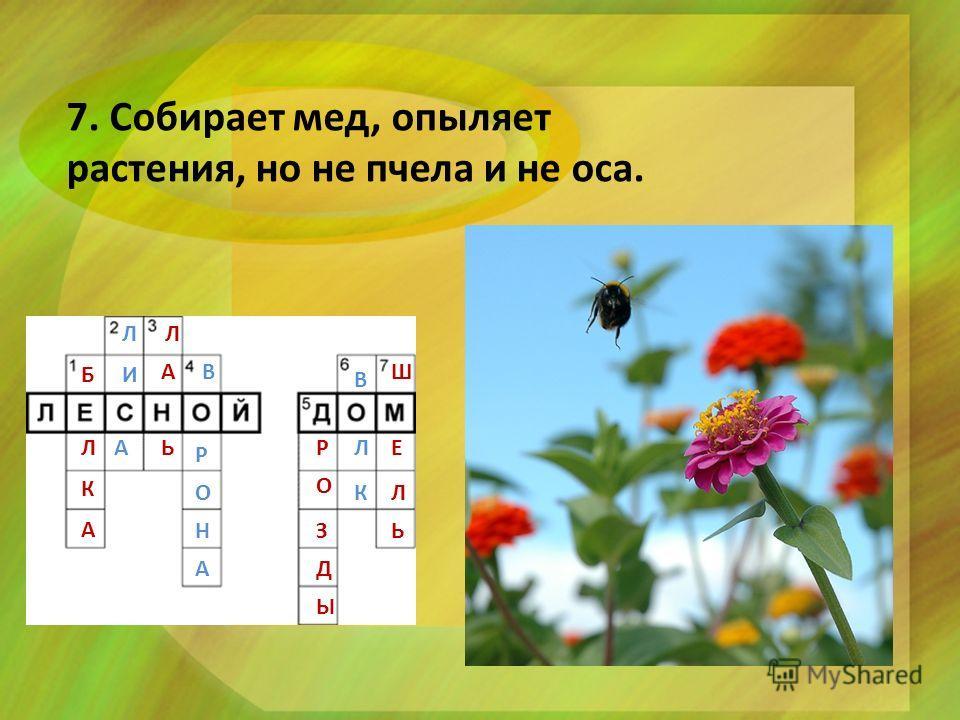 7. Собирает мед, опыляет растения, но не пчела и не оса. Б Л К А Л И А Л А Ь В Р О Н А Р О З Д Ы В Л К Ш Е Л Ь