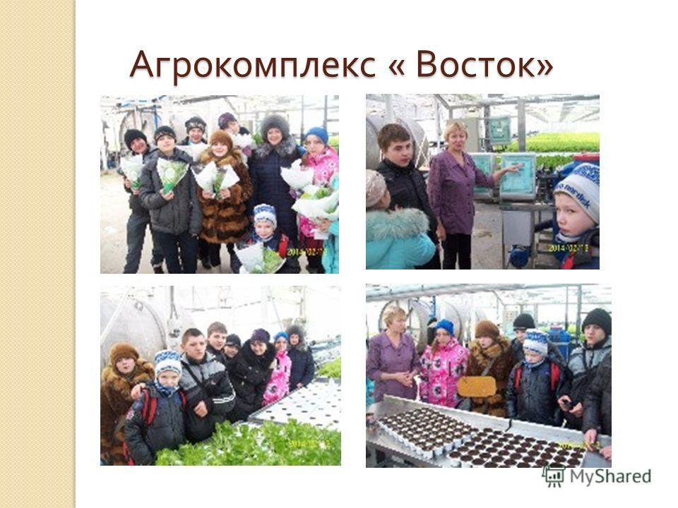 Агрокомплекс « Восток »