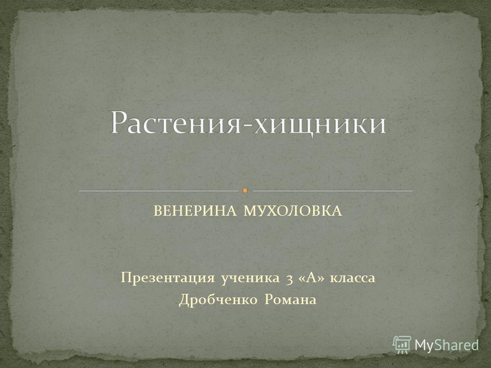 ВЕНЕРИНА МУХОЛОВКА Презентация ученика 3 «А» класса Дробченко Романа