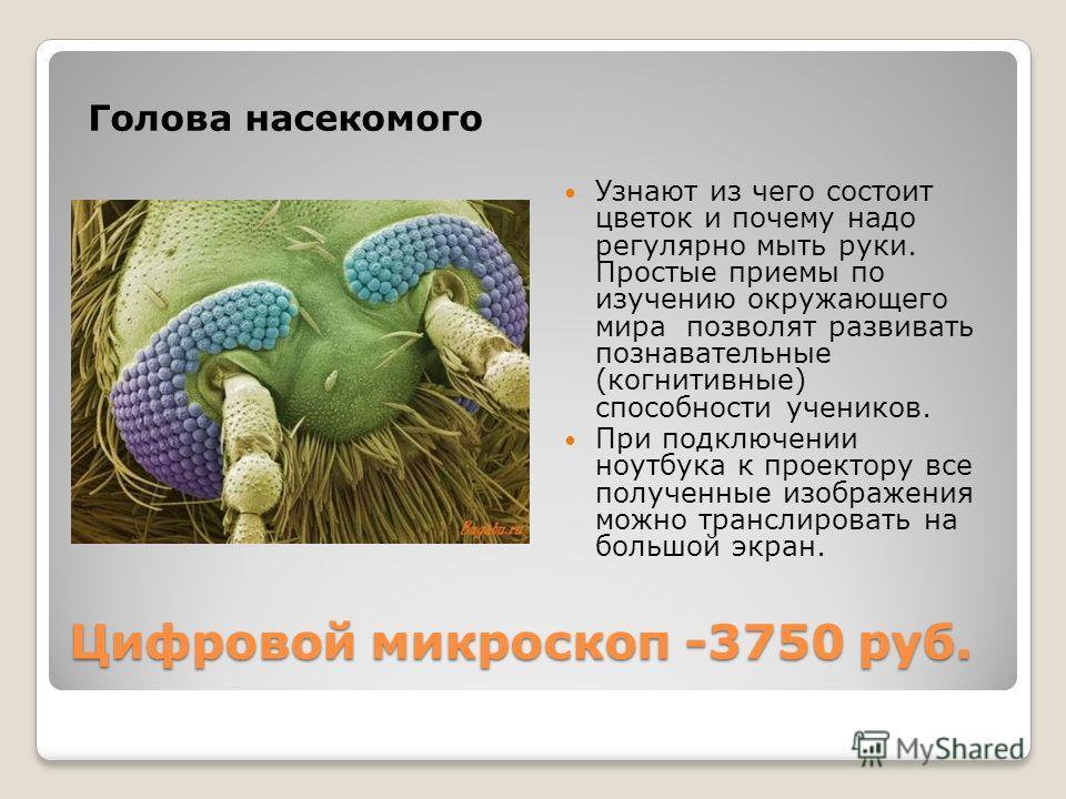 Цифровой микроскоп -3750 руб. Голова насекомого Узнают из чего состоит цветок и почему надо регулярно мыть руки. Простые приемы по изучению окружающего мира позволят развивать познавательные (когнитивные) способности учеников. При подключении ноутбук