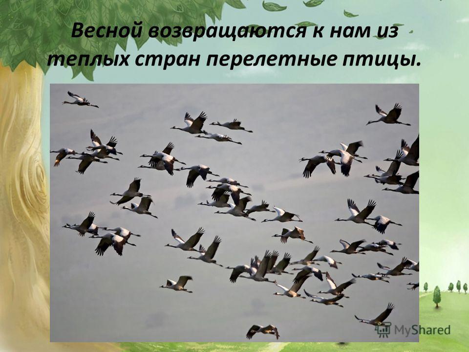 Весной возвращаются к нам из теплых стран перелетные птицы.