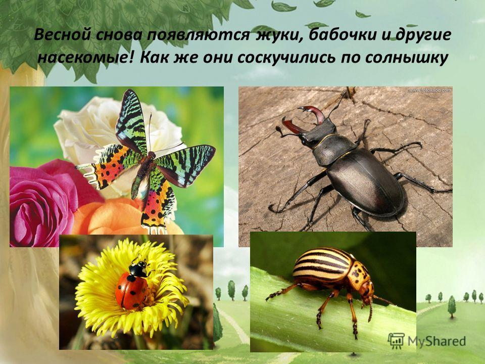 Весной снова появляются жуки, бабочки и другие насекомые! Как же они соскучились по солнышку