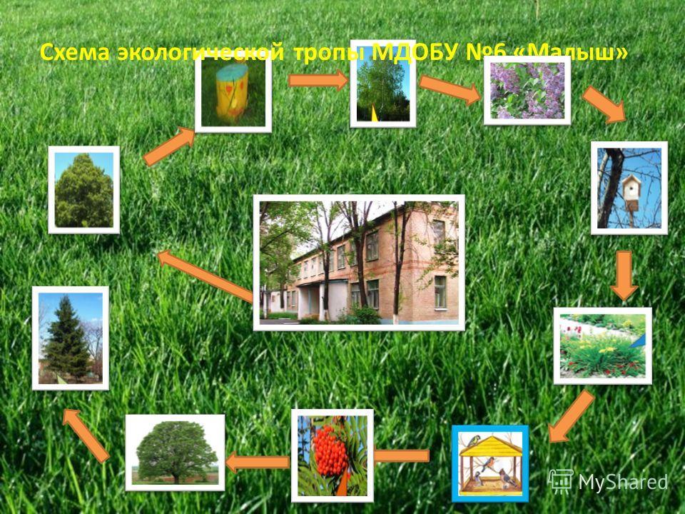1 2 7 Схема экологической тропы МДОБУ 6 «Малыш»