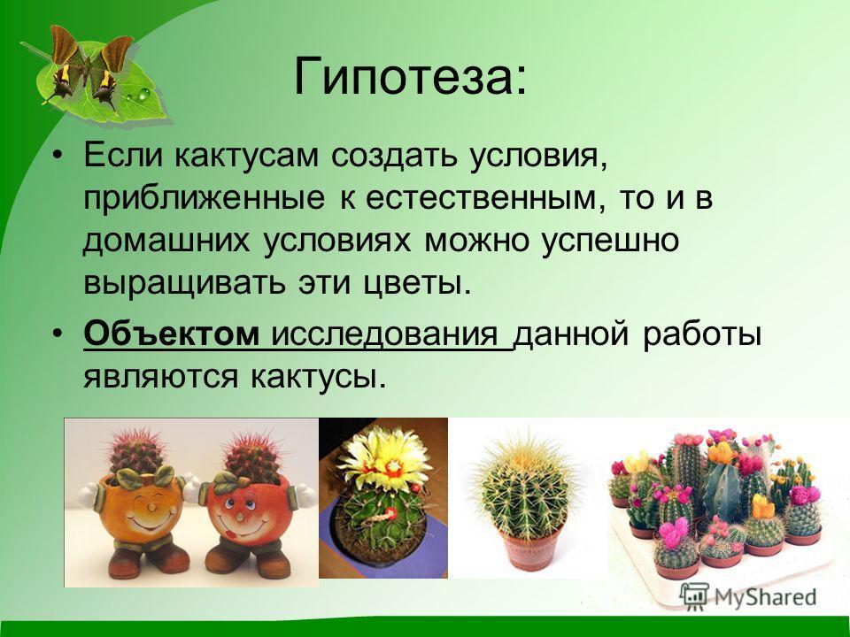 Гипотеза: Если кактусам создать условия, приближенные к естественным, то и в домашних условиях можно успешно выращивать эти цветы. Объектом исследования данной работы являются кактусы.