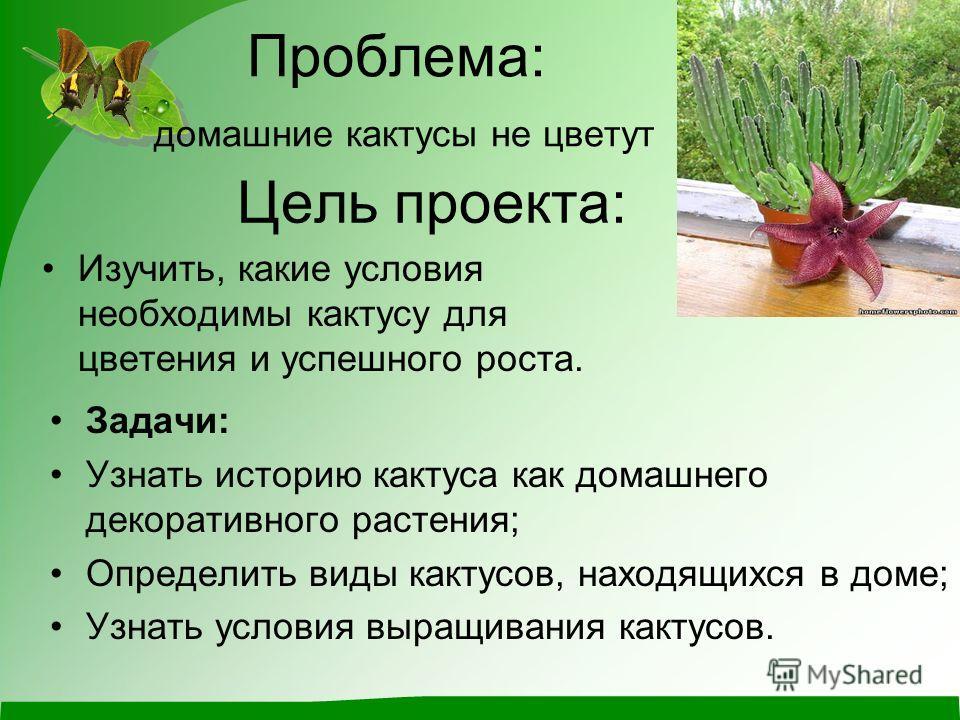 Цель проекта: Задачи: Узнать историю кактуса как домашнего декоративного растения; Определить виды кактусов, находящихся в доме; Узнать условия выращивания кактусов. Изучить, какие условия необходимы кактусу для цветения и успешного роста. Проблема: