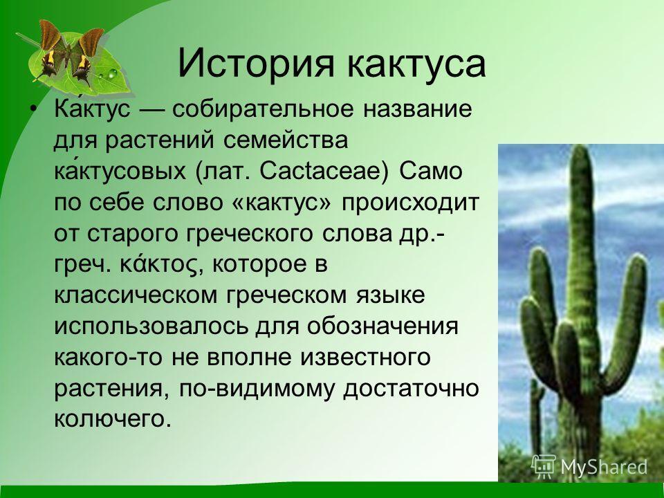 Доклад о домашнем растении кактус 2148