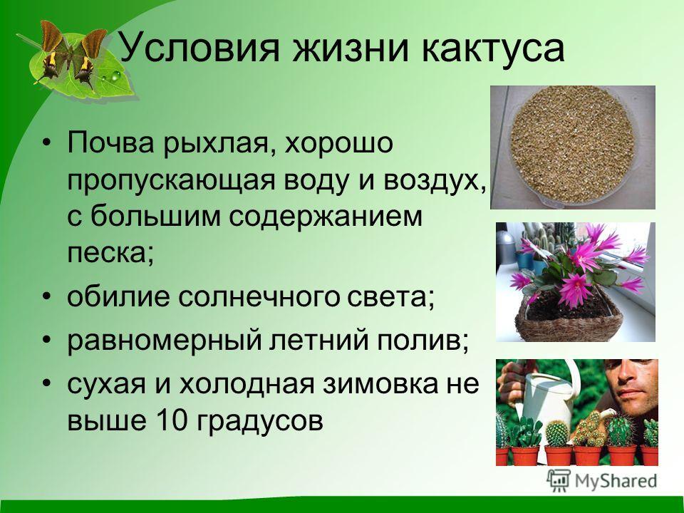 Условия жизни кактуса Почва рыхлая, хорошо пропускающая воду и воздух, с большим содержанием песка; обилие солнечного света; равномерный летний полив; сухая и холодная зимовка не выше 10 градусов