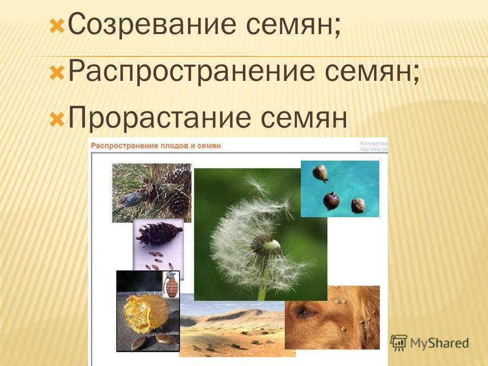 Созревание семян; Распространение семян; Прорастание семян