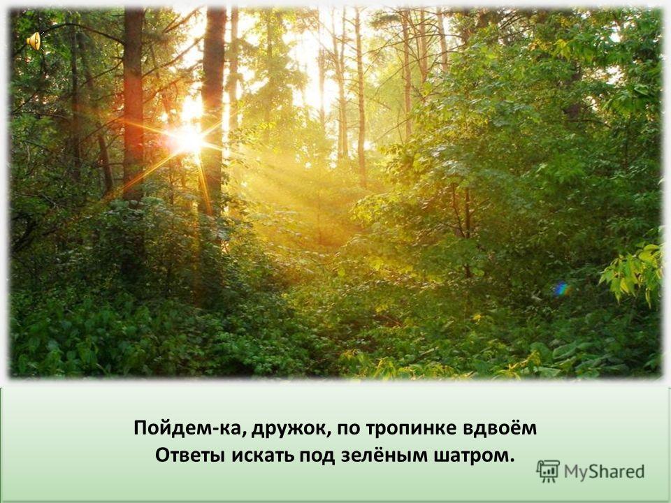 Когда ты идёшь по тропинке лесной, Вопросы тебя обгоняют гурьбой. Одно «ПОЧЕМУ» меж деревьями мчится, Летит по пятам за неведомой птицей. Когда ты идёшь по тропинке лесной, Вопросы тебя обгоняют гурьбой. Одно «ПОЧЕМУ» меж деревьями мчится, Летит по п