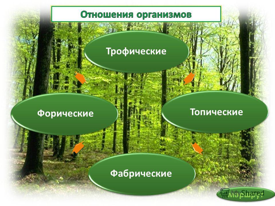 Трофические Топические Фабрические Форические маршрут