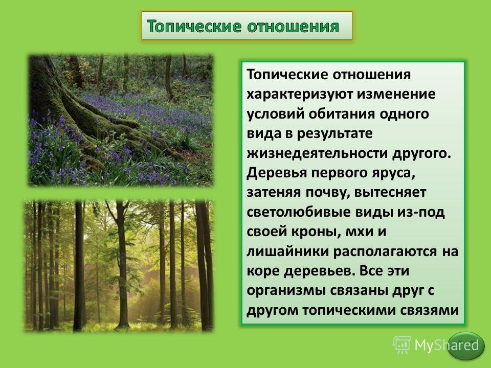 Топические отношения характеризуют изменение условий обитания одного вида в результате жизнедеятельности другого. Деревья первого яруса, затеняя почву, вытесняет светолюбивые виды из-под своей кроны, мхи и лишайники располагаются на коре деревьев. Вс